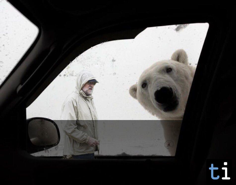 Los mejores memes del oso de Twitter