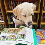 Cachondeo con la perra de Jaén que entiende catalán gracias a su dueña